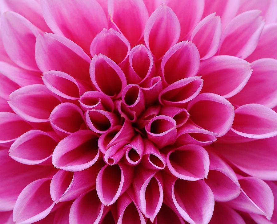 Full Color Pink Flower
